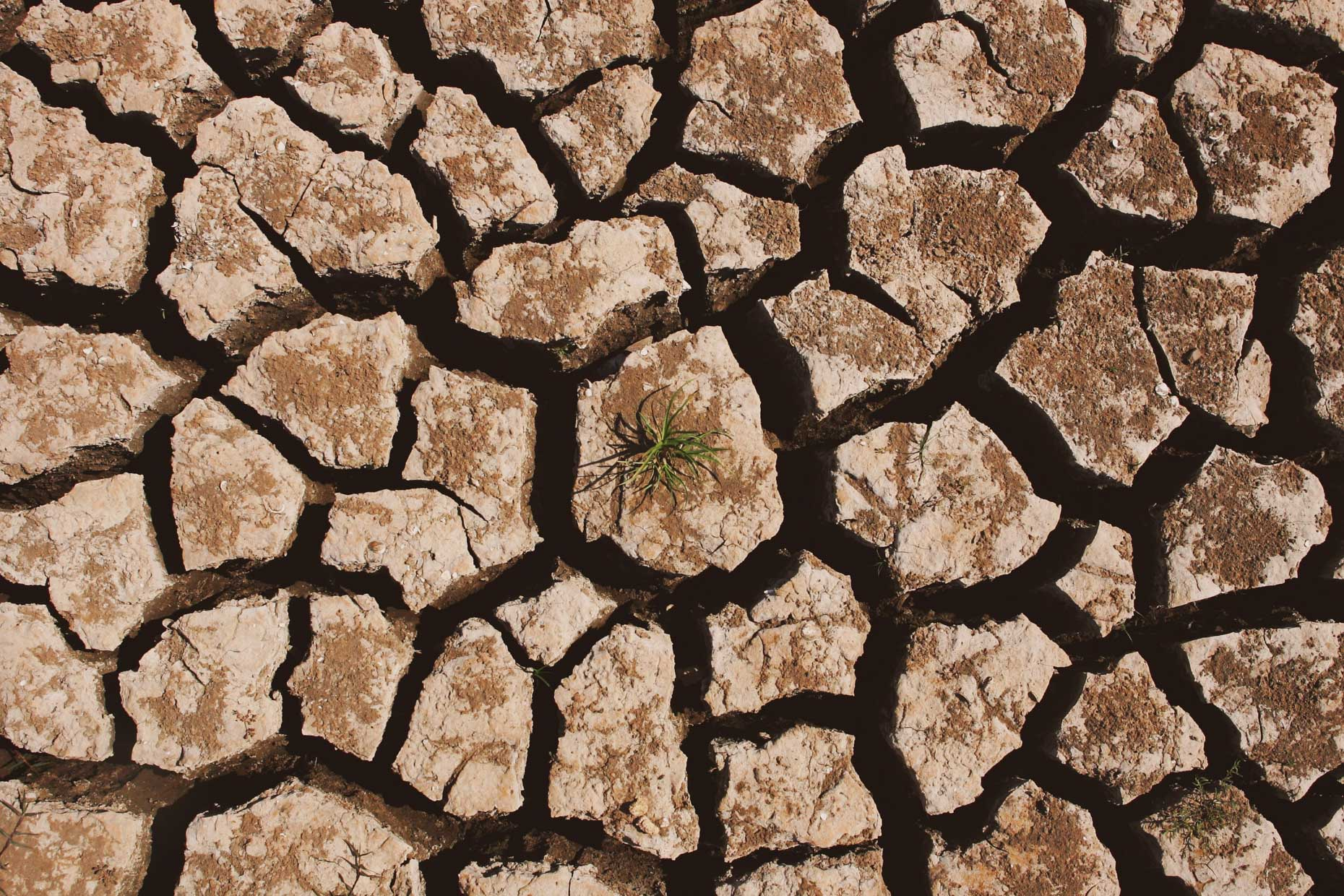 Dry cracked earth from drought